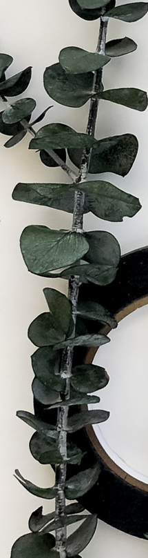 Eucalyptus branch laying on top of a roll of black washi tape